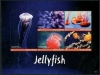 ANTIGUA - Scott NEW ISSUE Jellyfish Sheetlet II of 5 Different (1)  Another stamp from Herrick Stamp Company
